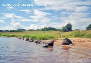 Объект недвижимости на Волге в д.Ясенское-Тверская областьОсташковский район