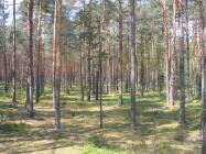 Продажаучастка на Волге в д.Оршаплощадью15соток-Тверская областьКалининский район
