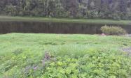 Участок земли на Волге в д.Новоалексеевское-Тверская областьРжевский район