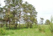 Участок земли на Волге в д.Быково-Тверская областьКимрский район